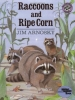 Raccoons and Ripe Corn